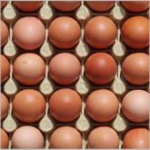Art3_eggs_165